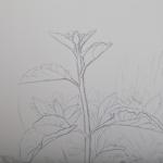 Tolan, Plant Portrait 3, 2018, graphite on mylar 11 x 17 - Detail