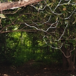 "Tolan, Forestland 11, 2018, photograph, 11 x 15"""