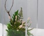 Vanitas #1,  (twig) acrylic box, silk, plastic, twig, bees wax, 2006