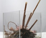Vanitas #3,  (pink flowers) acrylic box, bees wax, silk flowers, roots, dirt, 2006