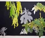 "Rhododendron Garden II, Arches paper, graphite, collage, 30 x 44"", 2009"