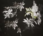 """Rhododendron Garden III (black),  Sommerset paper, graphite, collage, 20 x30"""", 2009"""