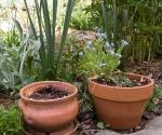 """Suburban Garden (clay pot), photograph, 15"""" x 20"""""""