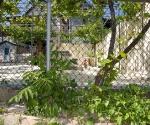 """Suburban Garden (fence view), photograph, 15"""" x 20"""""""