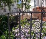 """Suburban Garden (creeping phlox), photograph, 15"""" x 20"""""""