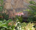 "Suburban Garden (pink lily), photograph, 15"" x 20"""