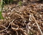 """Suburban Garden (dead matter), photograph, 15"""" x 20"""""""
