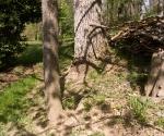 """Suburban Garden (stick pile), photograph, 15"""" x 20"""""""