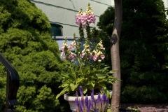 Suburban Garden 2010